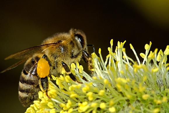 Wie gefährlich ist das 5G Netz für Bienen?