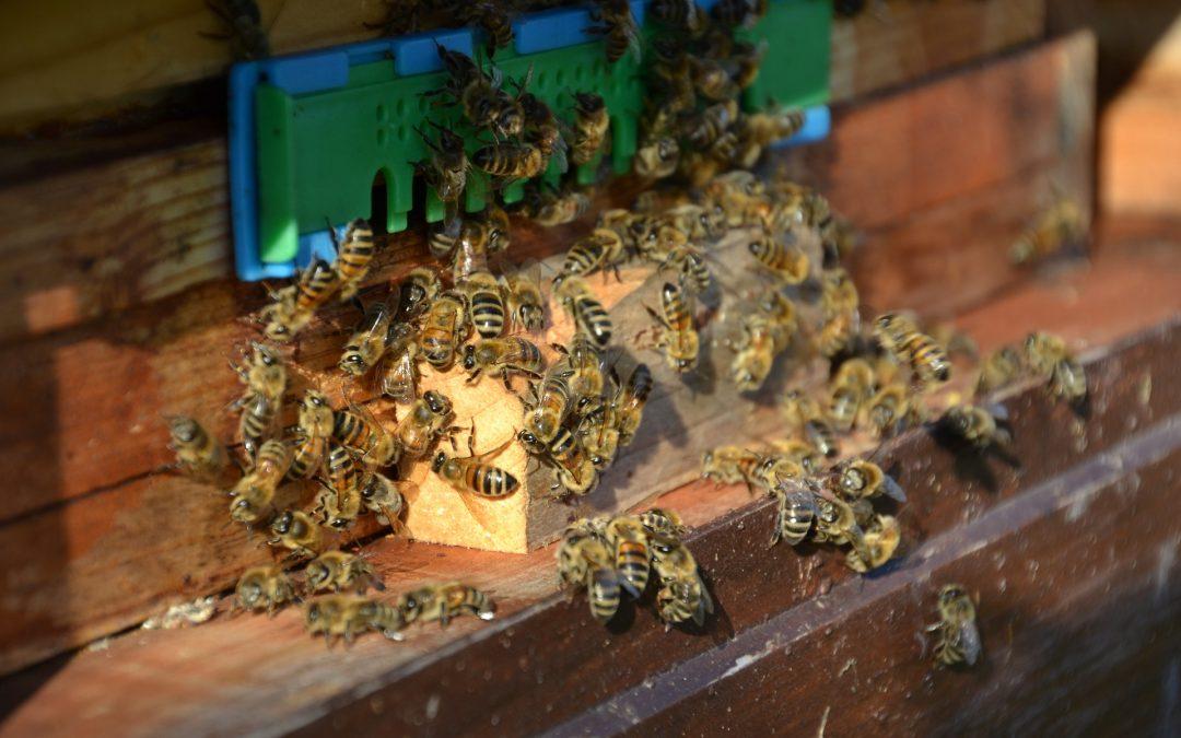 Welche Bienenarten gibt es?
