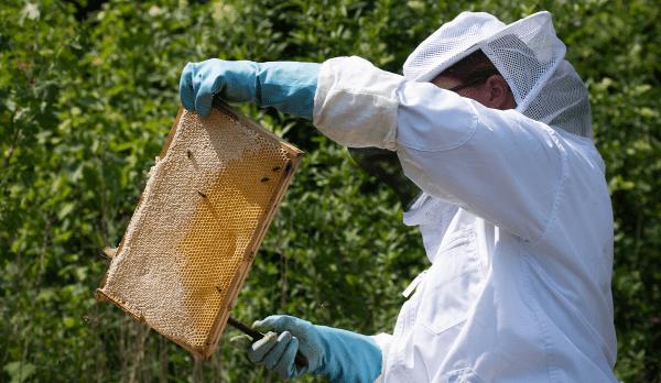 Du überlegst Bienen zu halten? Was gibt es zu beachten