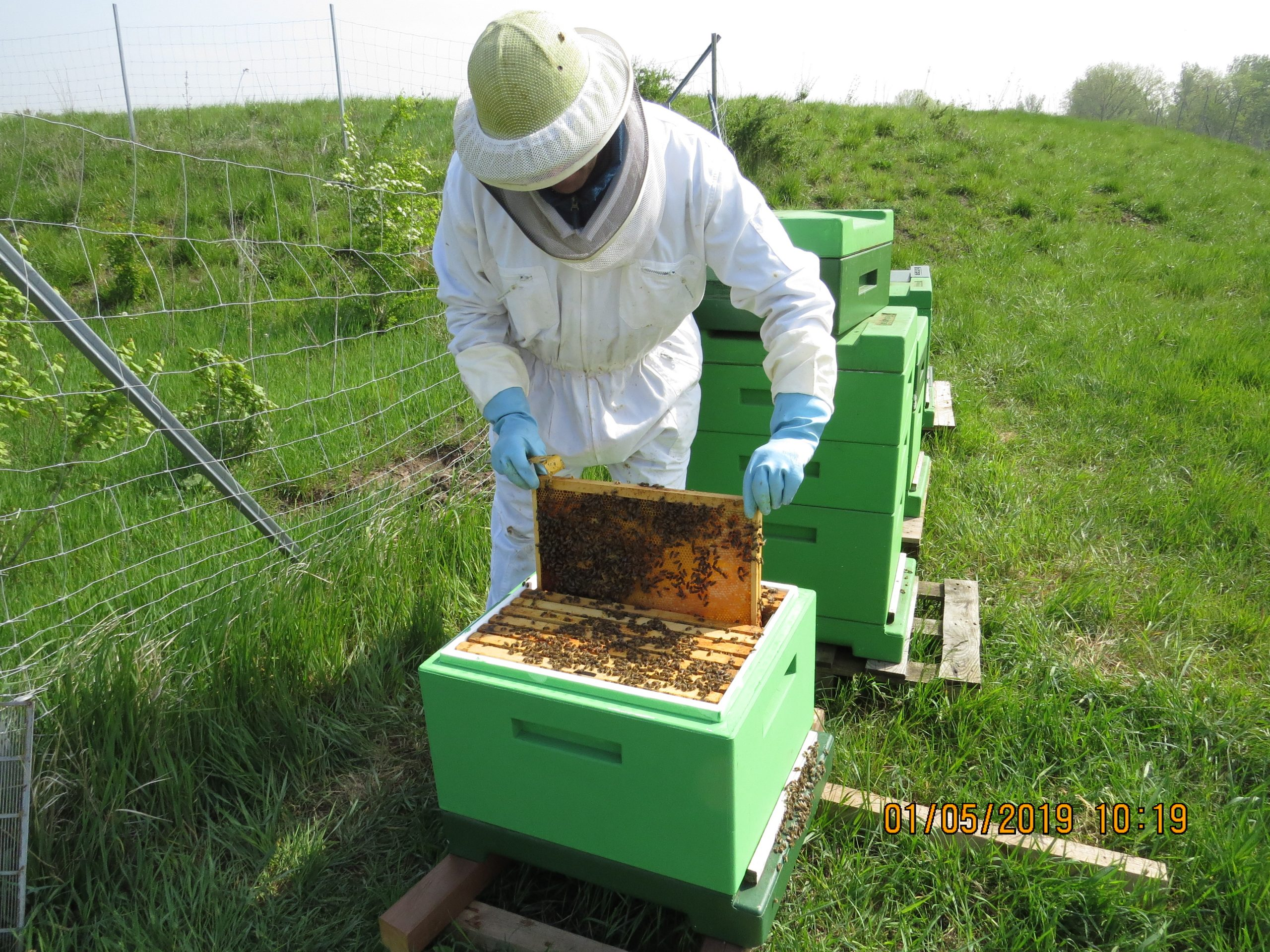Bienenjahr