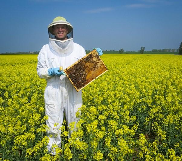 Wesensgemäße Bienenhaltung: einfach und natürlich