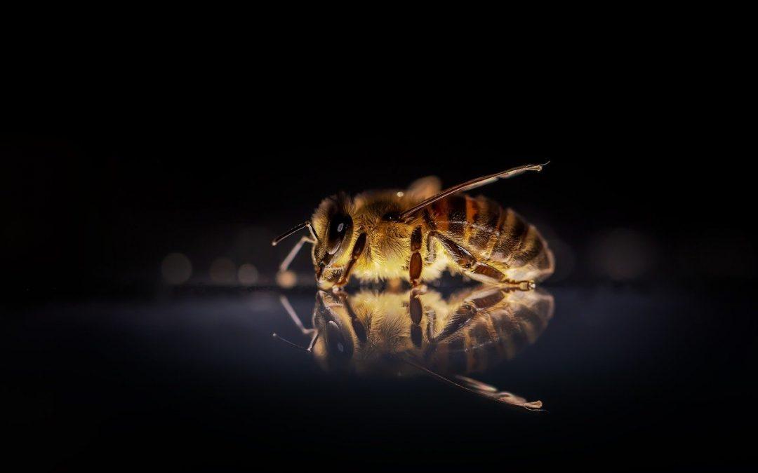 Hornissen und Bienen – Wo liegt der Unterschied?