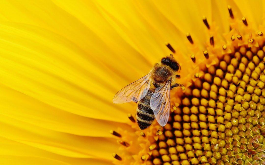 Auswirkungen des Klimawandels auf die Bienen