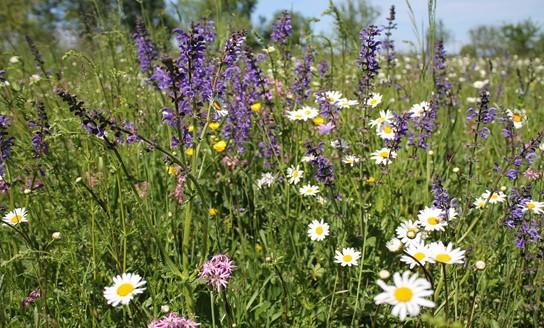 Bienen retten: Was kann ich tun?